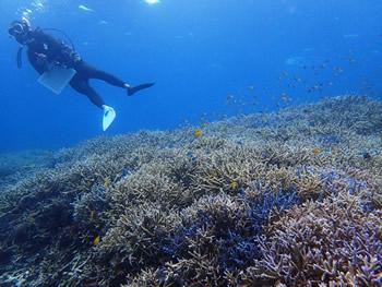 サンゴ礁から受ける恩恵