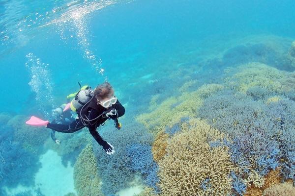 体験ダイビングの参加条件