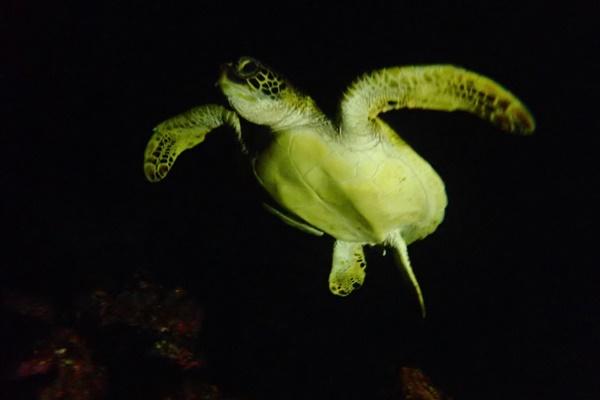 石垣島の熱帯魚