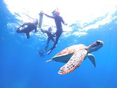 石垣島のウミガメ