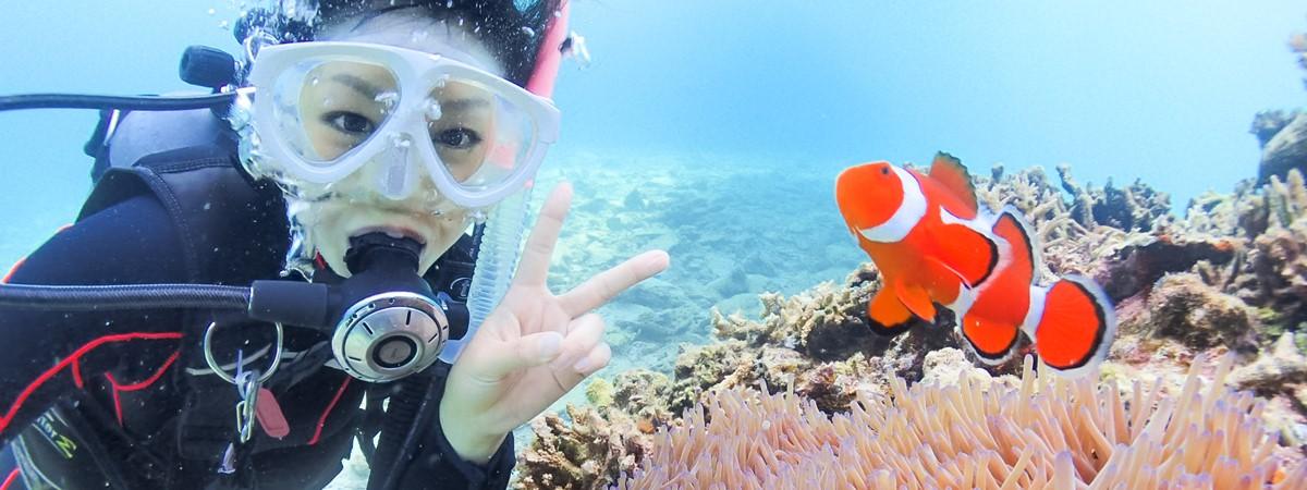 【石垣島発】マンタorウミガメシュノーケリング&体験ダイビング