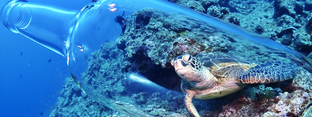 石垣島で出会えるウミガメ