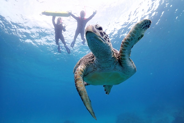 ウミガメと一緒に泳ぐには?