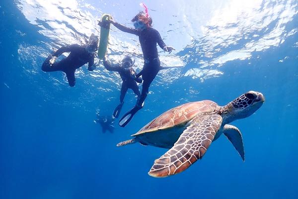 ウミガメに会えるポイント選び